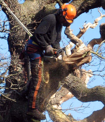 The Tree Company is an equal opportunities employer and is proud to attract arborists from all over the world